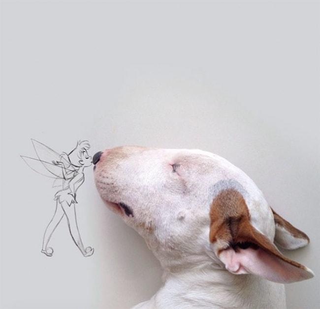 Jimmy Bull Terrier 13