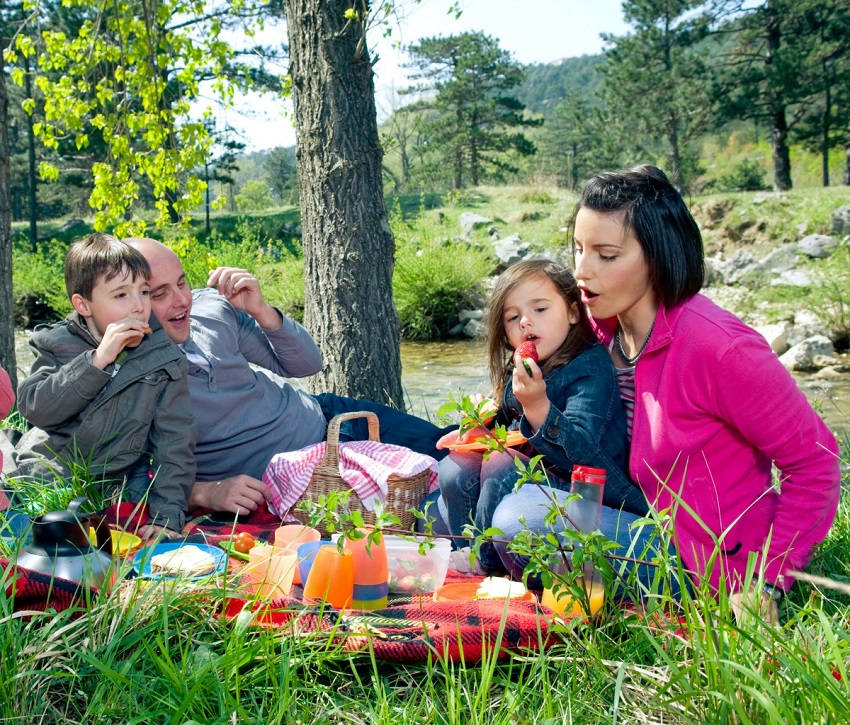 Ultimate Guide to Picnics