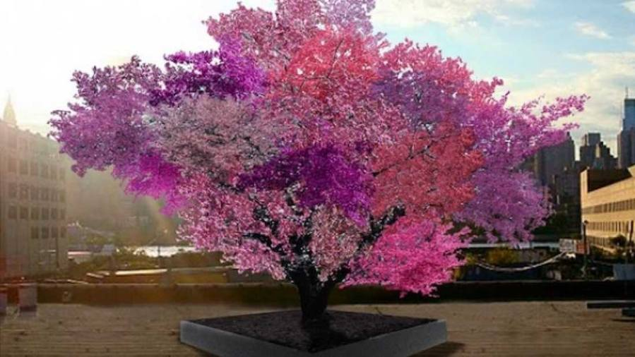Tree produces 40 different kinds of fruit