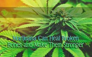 Marijuana Can Heal Broken Bones