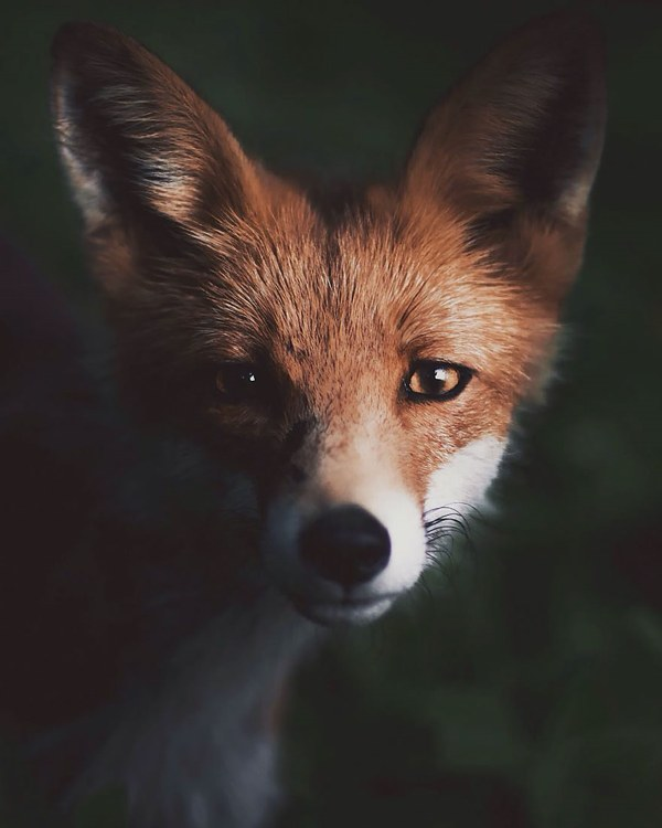 wildlife images konsta punkka 3