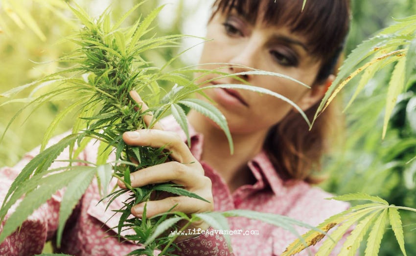 Eating Raw Weed Could Be Good for You – Here Is Why