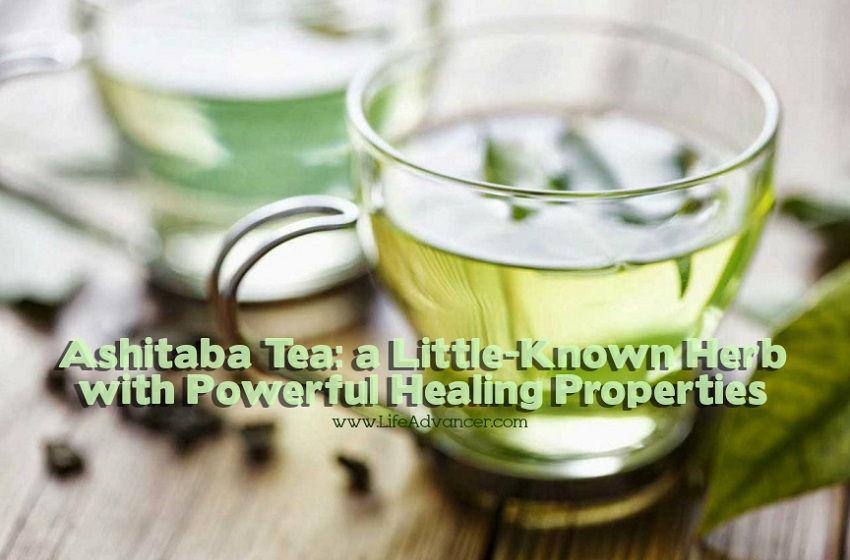 Ashitaba Tea Herb