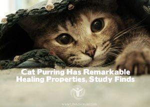 Cat Purring Healing Properties