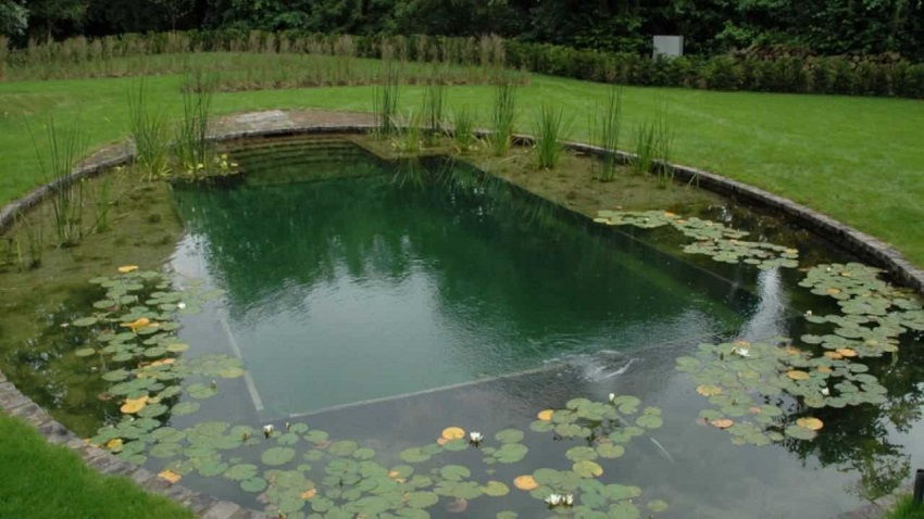 How to build a natural pool in your garden for Building a swimming pool in garden