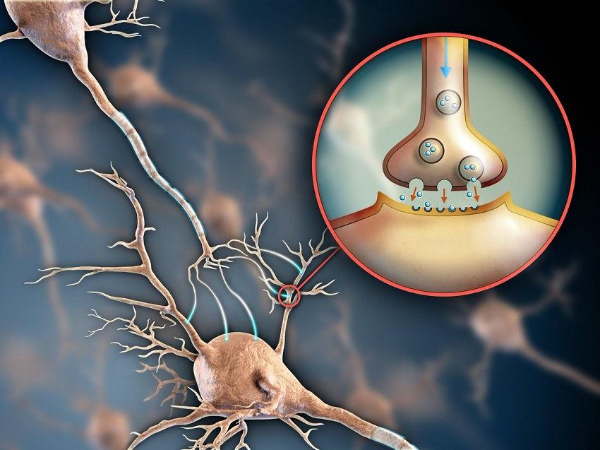Serotonin - How Its Symptoms Make You Anxious and Depressed