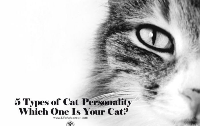 Types of Cat Personality