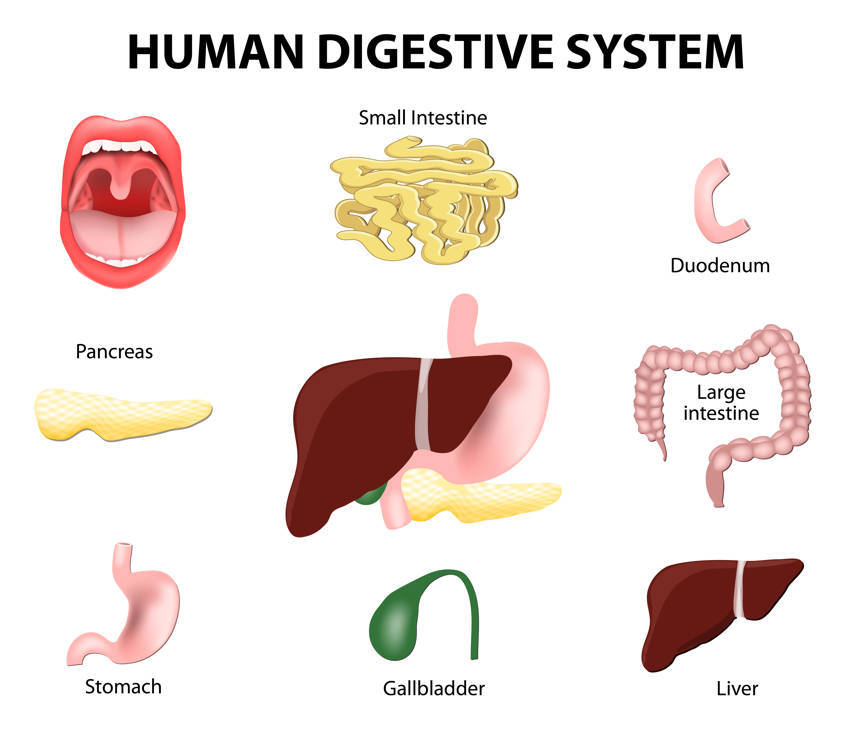 Signs Of Digestive System Problems  And How To Restore Your Gut Balance