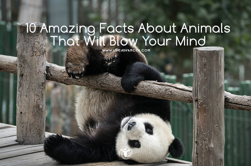 amazing facts about animals