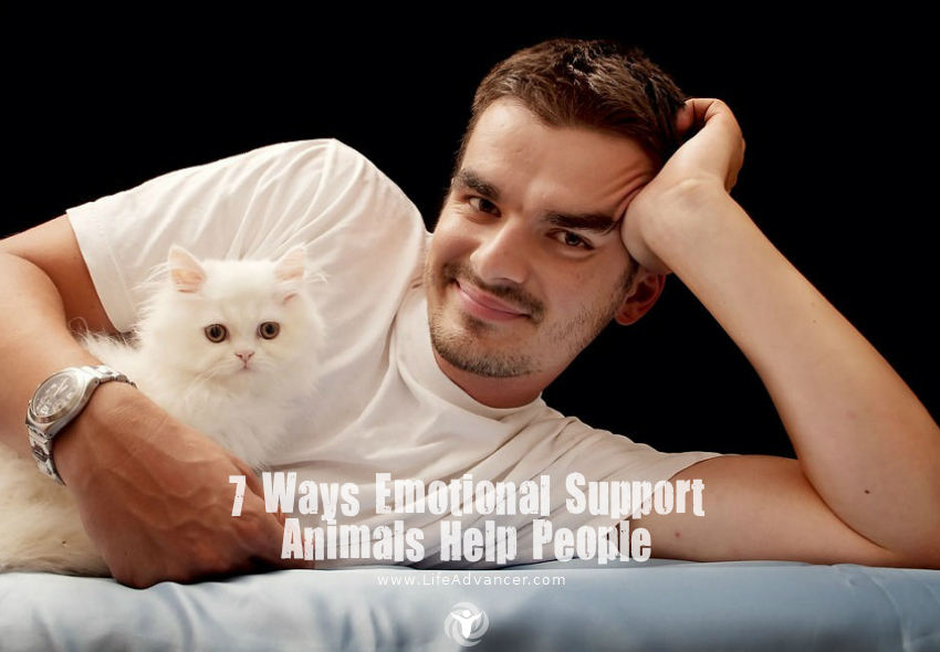 Emotional Support Animals Help