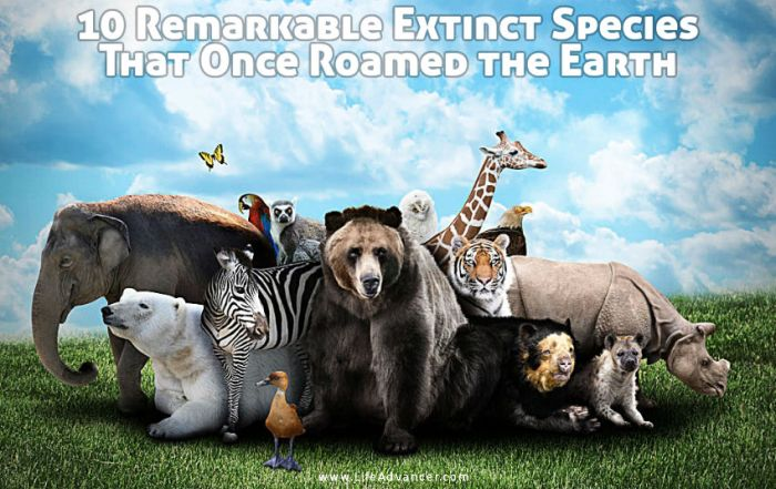 Extinct Species That Once Roamed the Earth
