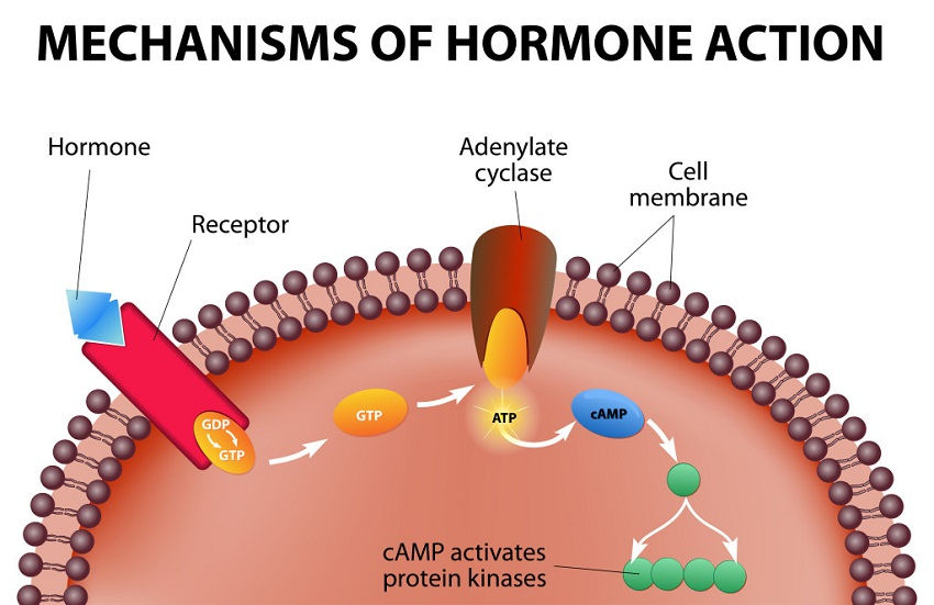 Hormone Imbalance Symptoms You Shouldn't Ignore