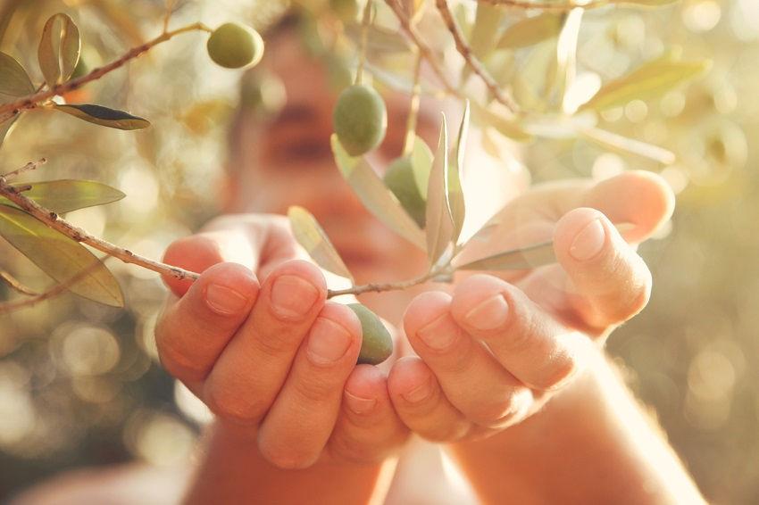 Final words - olive leaf