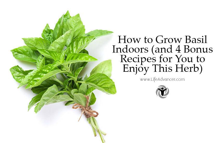 How to Grow Basil Indoors