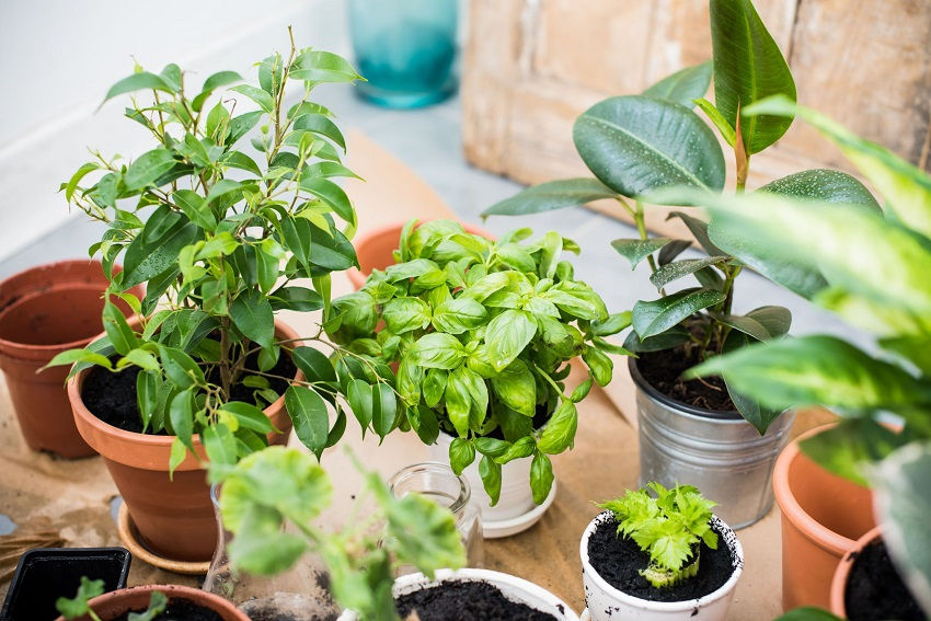 How to grow herbs in your backyard