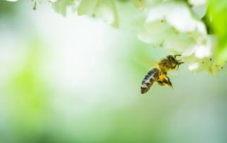 How to Save the Bees 6 Practical Tips You Can Use Every Day