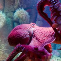 9 Octopus Facts That Prove These Creatures Are Absolutely out of This World!