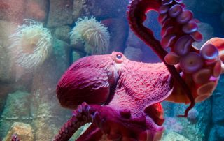 Octopus Facts That Will Blow Your Mind
