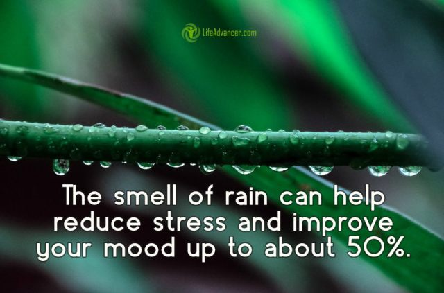 he smell of rain can help reduce stress and improve your mood by up to 50%