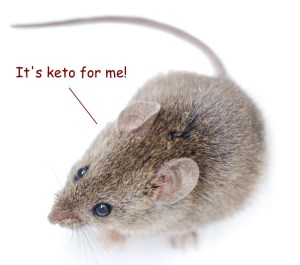ketogenic diet mouse