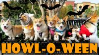 HALLOWEEN DOG COSTUME PARTY for CORGIS - Life After ...