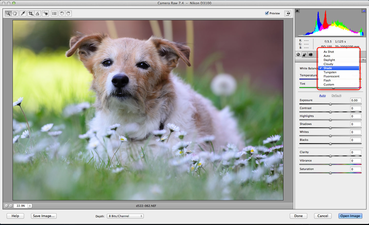 Photoshop Elements RAW conversions