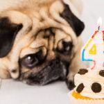 寵物鮮食蛋糕食譜|無油無鹽好健康,DIY毛小孩也能開心吃的生日蛋糕