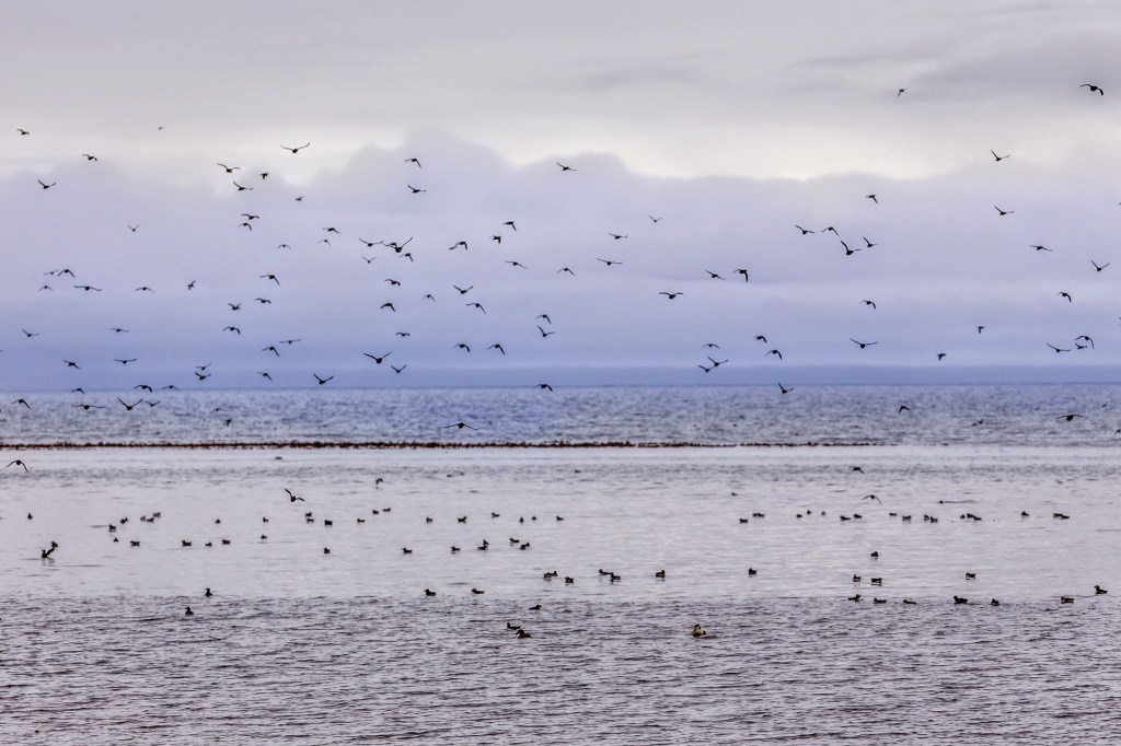 Colonies of birds on the island