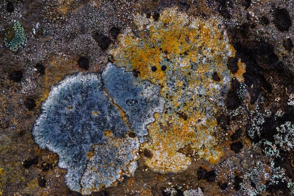 Lichens near Háifoss
