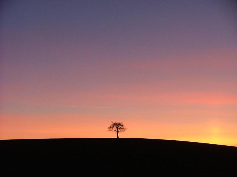 tree-648788_1280