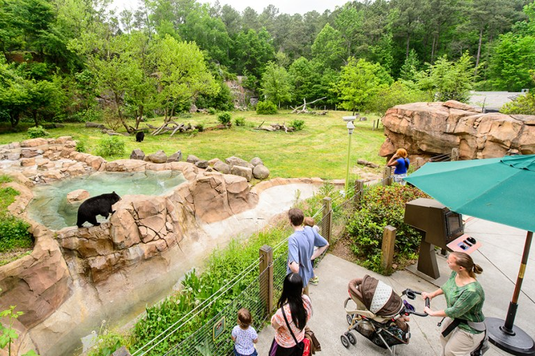Visitors stand on a vista overlooking a black bear in a pool of water.