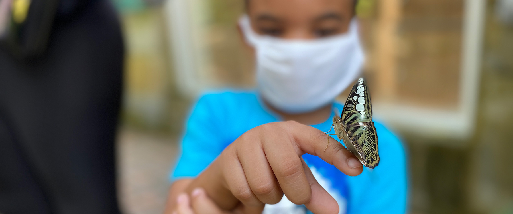 A young boy in he Butterfly House