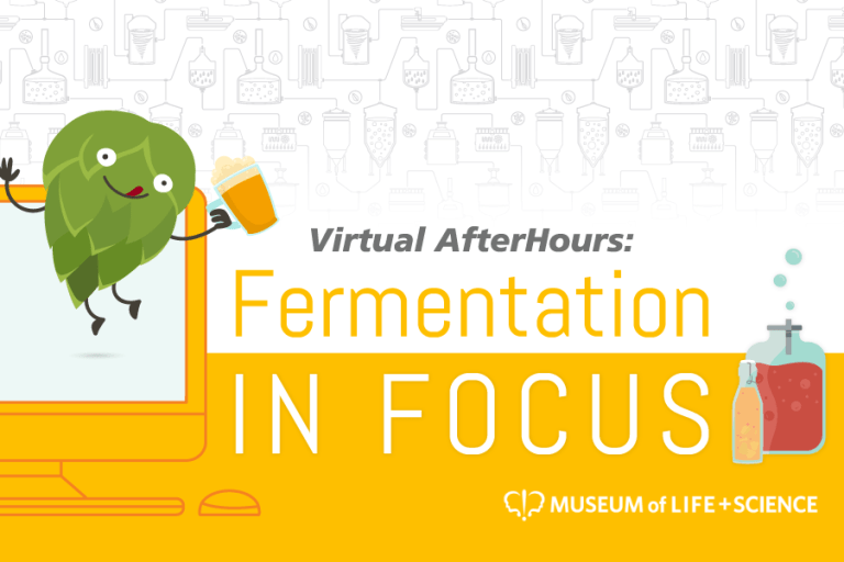 Fermentation in Focus graphic