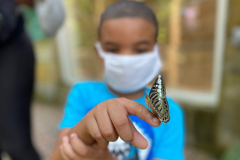 A boy and a butterfly, with the butterfly in focus