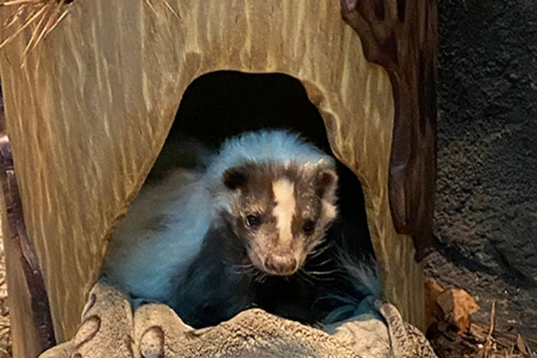 Florian in his new sleeping log