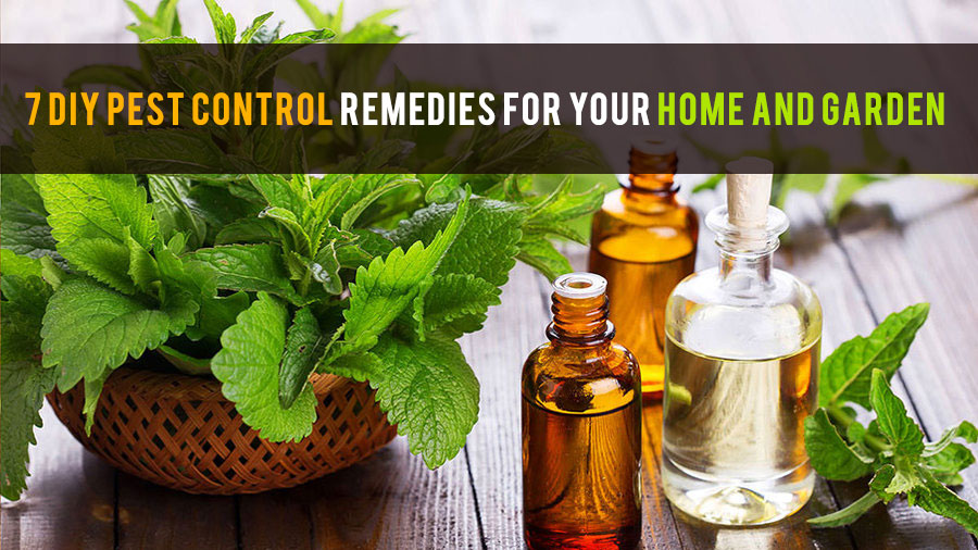 7 DIY Pest Control Remedies For Your Home And Garden