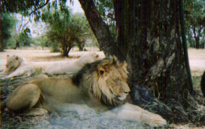 Lions Johannesburg