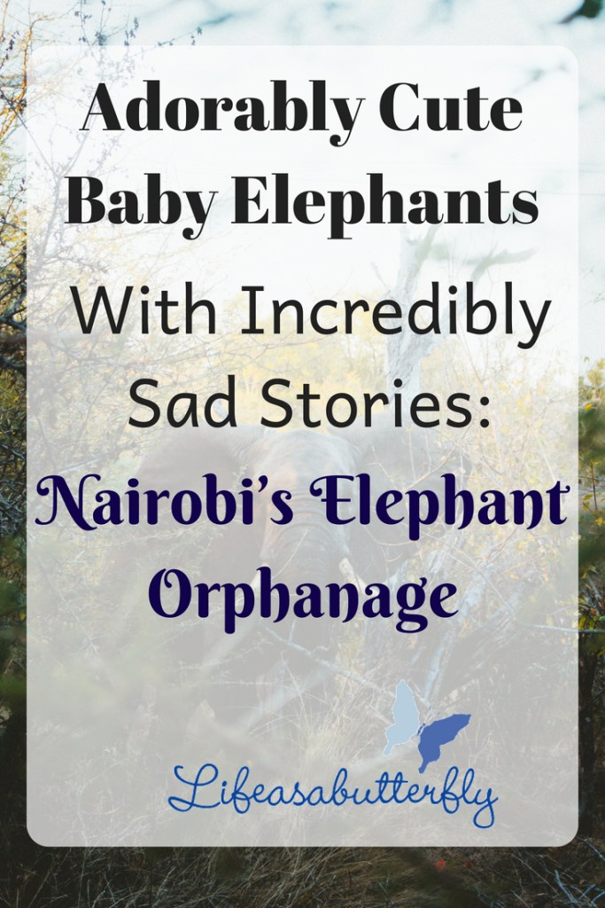 Adorably Cute Baby Elephants With Incredibly Sad Stories: Nairobi's Elephant Orphanage