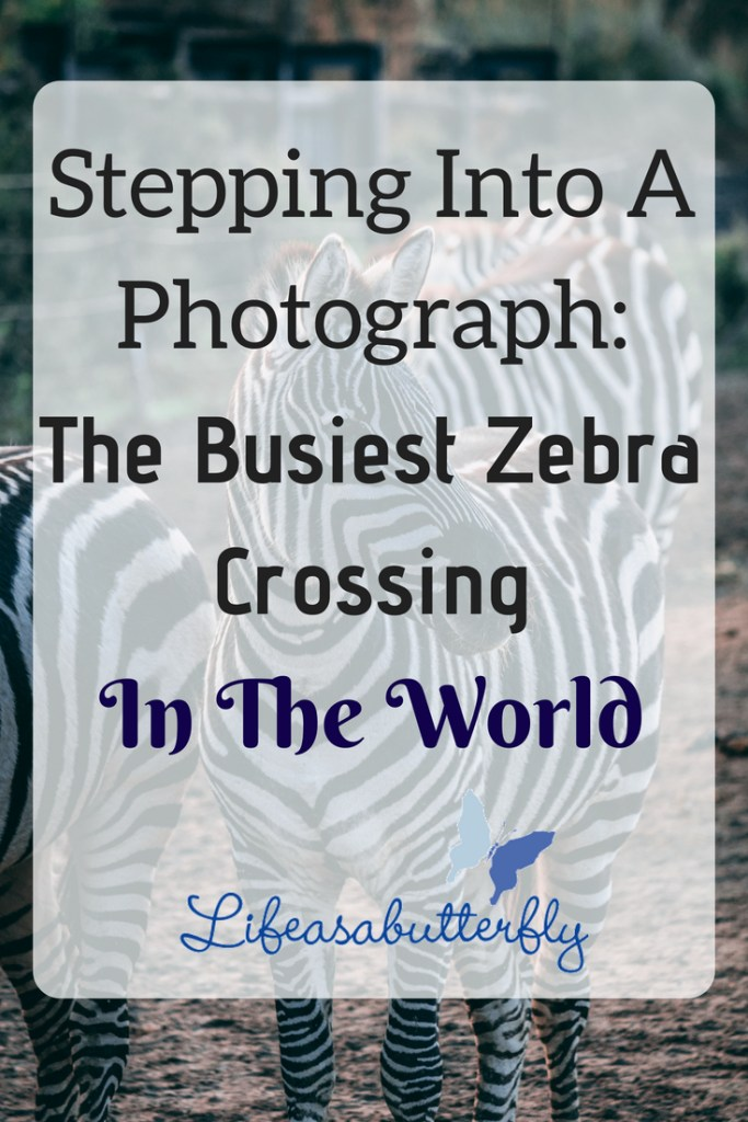 Stepping Into A Photograph:The Busiest Zebra Crossing In The World