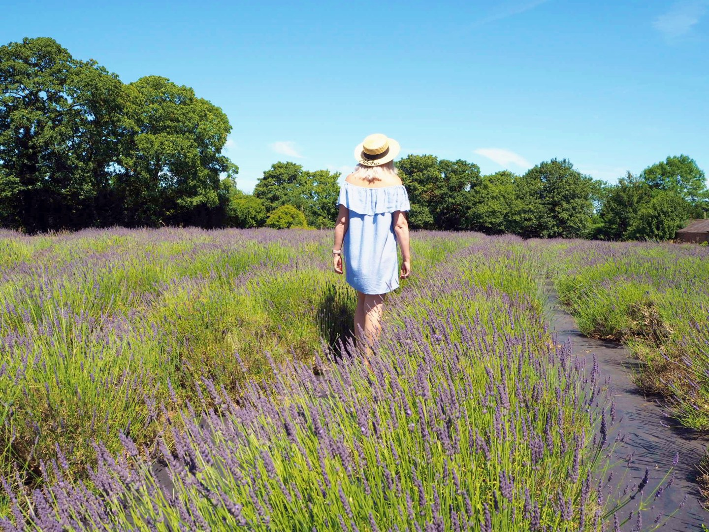 A lavender meadow, moving up day & a box of treats...