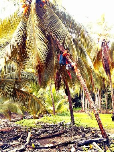 Monkey man, Costa Rica