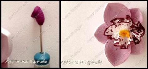 orchid-quilling