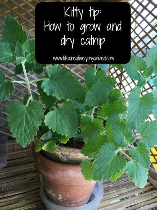 Kitty tip: How to grow and dry catnip