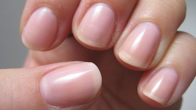 Nails Should Be Kept Clean Short And Not Extend Past The Fingertips Subungual Region Is Site Of Majority Bacteria On Human