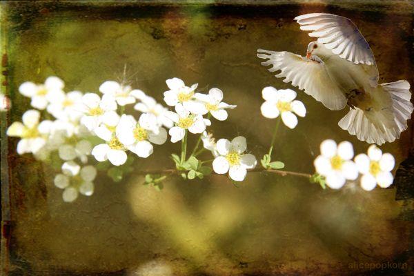 സീറോ മലബാര് ദനഹാക്കാലം മൂന്നാം വെള്ളി ജനുവരി 22 യോഹ. 10: 1-15 ഇടയന്റെ സ്വരം