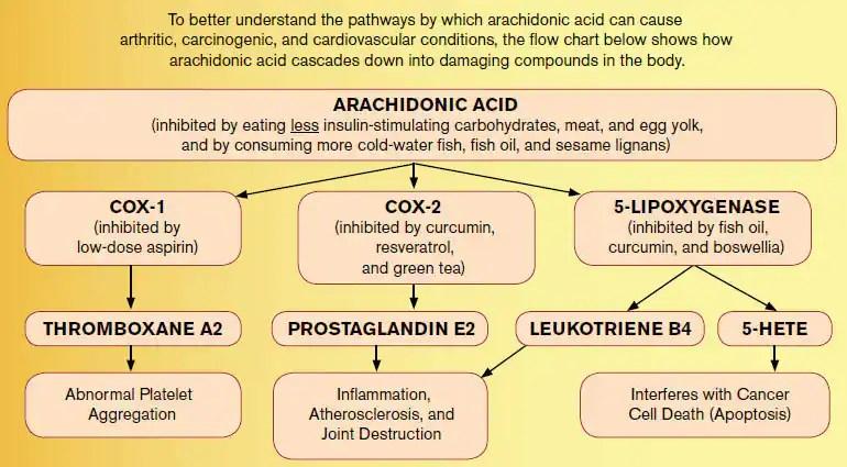 Arachidonic-Acid