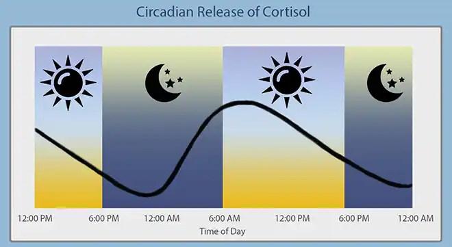 Afbeeldingsresultaat voor Cortisol