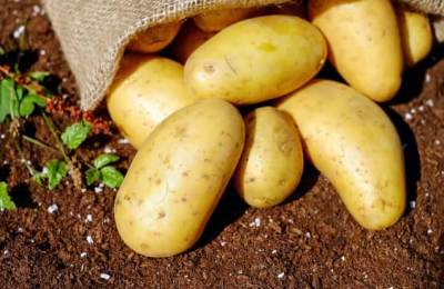 How Long Do Potatoes Last? Health Risk, Cooked, Raw and More