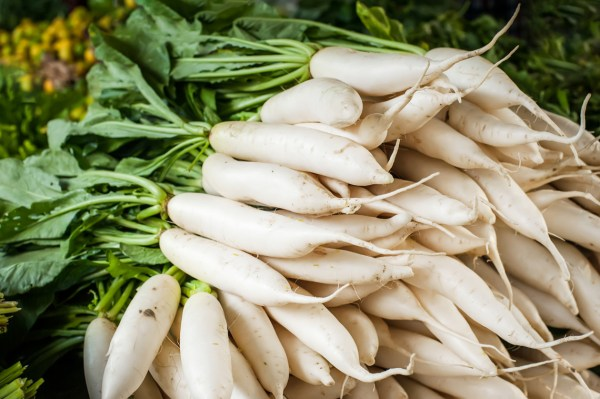 Daikon to lose weight quotat the rootquot LifeGate