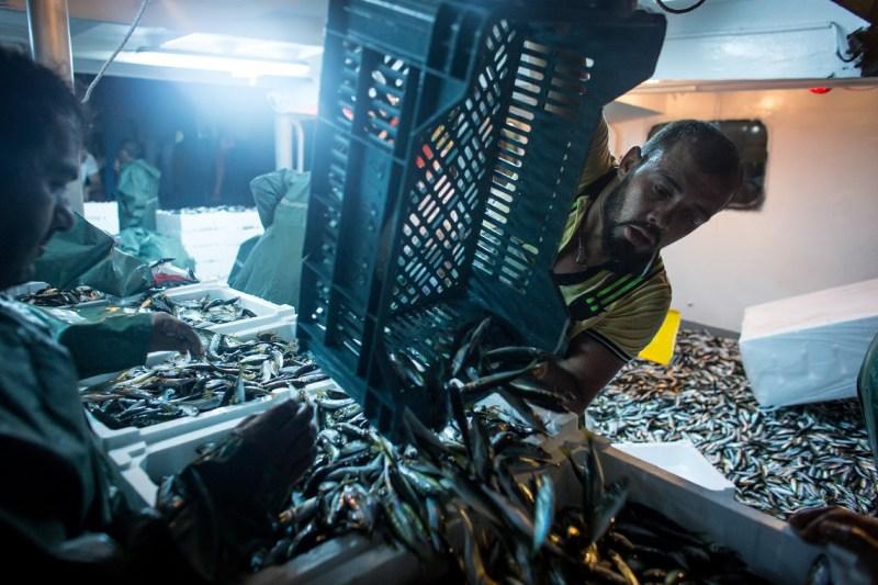 Pescatore turco scarica il pesce appena pescato